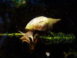 snail-exercising