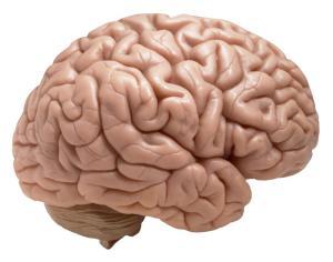 brain33