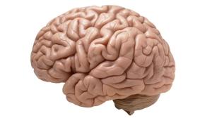 brain scientist magazine